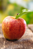 Ripe red apple with water droplets Royalty Free Stock Photography
