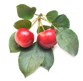 Ripe Red Apple With Green Leaf Stock Photography