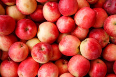 Ripe red apples� Stock Photos