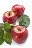 Ripe red apples stock images