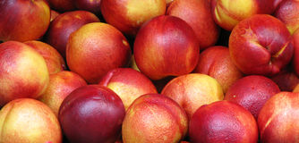 Ripe red apples. Wide angle view of ripe red apples in pile Stock Photography
