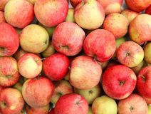 Ripe red apples. Fresh ripe red apples. Apple harvest royalty free stock images