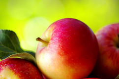 Ripe red apples Stock Image