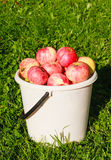 Ripe red apples in a bucket Stock Images