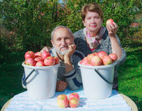 Ripe red apples in a bucket Stock Photo