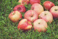 Ripe red apples on grass Stock Photography