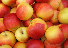 Ripe red apples in a heap Stock Photos