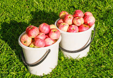 Ripe red apples Royalty Free Stock Images