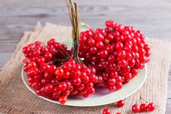 Ripe red berries of a viburnum in a plate on an old wooden table. The source of natural vitamins. Used in folk medicine. Ripe red berries of a viburnum in a Stock Photo