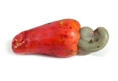 Ripe Red Cashew Fruit, Marañon. Royalty Free Stock Photo