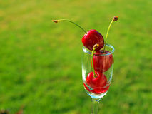 Ripe Red Cherries Royalty Free Stock Photo