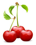 Ripe red cherries with leaves Royalty Free Stock Image