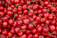 Ripe red cherries with sticks background. Some berries in focus, some are not Royalty Free Stock Image