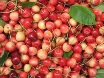 Ripe red cherry Stock Photos