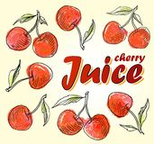 Ripe red cherry berries with leaves. Vector. Ripe red cherry berries with leaves Stock Illustration