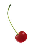 Ripe Red Cherry Royalty Free Stock Photography