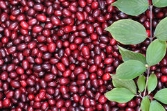 Ripe red cornelian cherries Stock Photos