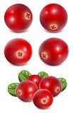 Ripe red cranberries with leaves Stock Photo