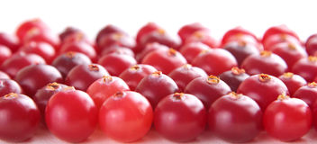 Ripe red cranberry Royalty Free Stock Images