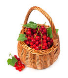 Ripe red currant Royalty Free Stock Photos