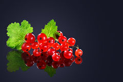 Ripe red currant berries on a black background. Stock Photos