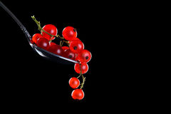 Ripe red currant berries on a black background. Royalty Free Stock Images