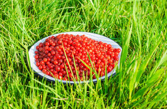 Ripe red currant berries in a deep plate on grass Stock Photo