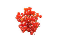 Ripe red currant berries isolated on white background. Royalty Free Stock Images