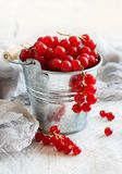 Ripe red currant berries. In a metal bucket Royalty Free Stock Images