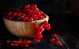 Ripe red currant berries Royalty Free Stock Images
