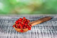 Ripe red currant berries in wooden spoon on wooden background. Copy space Stock Photo