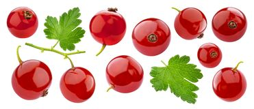 Ripe red currant isolated on white background closeup. Ripe red currant isolated on white background with clipping path. Fresh summer wild berries closeup stock photos