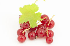 Ripe red currants Royalty Free Stock Photography