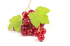 Ripe red currants Stock Images