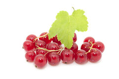 Ripe red currants Royalty Free Stock Photos