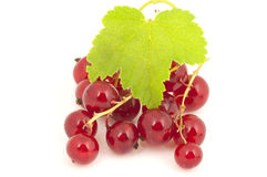 Ripe red currants Stock Photography