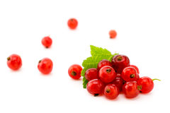 Ripe red currants closeup Royalty Free Stock Photo