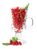 Ripe red currants in a glass Stock Photography