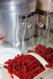 Ripe red currants for syrup. Currants, swing top bottles and steam juicer for homemade currants syrup Royalty Free Stock Images