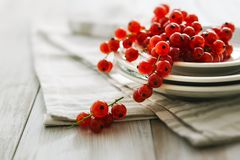 Ripe red currants. On whie plates Royalty Free Stock Photos