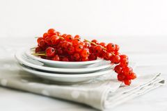 Ripe red currants. On whie plates Stock Photography