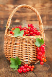 Ripe red currants in a wicker basket Royalty Free Stock Image