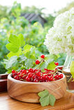 Ripe red currants in wooden bowl and bouquet of wh Royalty Free Stock Images