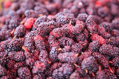 Ripe red and dark purple sweet flavor mulberry fruit background. Health benefits of mulberries include, to improve digestion, lowe. R cholesterol, aid in weight royalty free stock photos