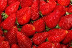 Ripe red freshly harvested strawberry royalty free stock photo