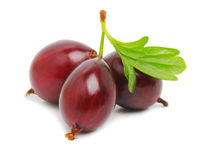 Ripe red gooseberry Royalty Free Stock Photo