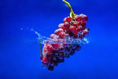 Ripe red grape.Splash water background royalty free stock images