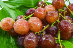Ripe red grape Stock Images