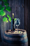 Ripe red grapes in glass and wine on old barrel. Ripe red grapes in glass and wine on old wooden barrel Stock Photo