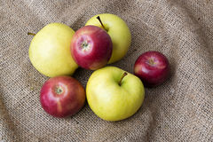 Ripe red and green apples Stock Images